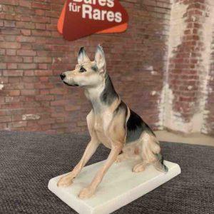 Meissen Schäferhund
